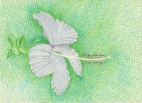 Joulia-Strauss-Z0064-Pflanzen5.jpg