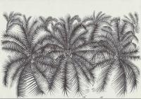 Joulia-Strauss-Z0070-Palmen.jpg